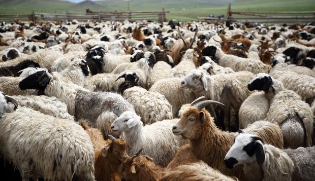 ضلع شگر کے علاقے ژھوقگو گلاب پور میں جانور بیمار پڑنے لگے، متعدد مویشی ہلاک