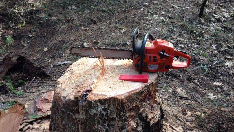 دیامر: تھک گاوں کے نواح میں واقع جوتی جنگلات کی جدید مشین کی مدد سے کھلے عام کٹائی جاری