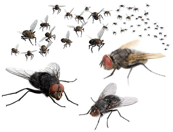 بیکری کے سامان سے مکھیوں اور چوہوں کے فضلہ جات برآمد