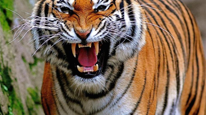 اگر گوشت کھانے والے (Carnivores)جانورشکارکرنا چھوڑ دیں تو پھر کیاہوگا۔۔۔؟