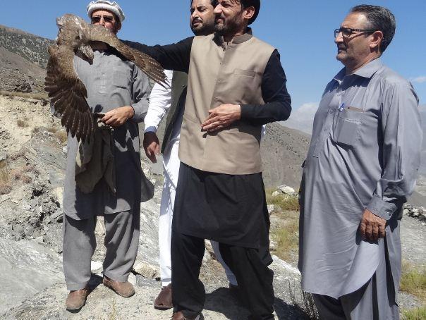 چترال: محکمہ جنگلی حیات نے تین شکاریوں کو گرفتار کر لیا، قیمتی باز آزاد