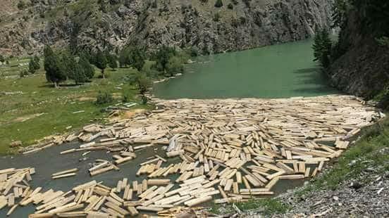 گلگت بلتستان میں جنگلات کی اہمیت اور بے دریغ کٹائی