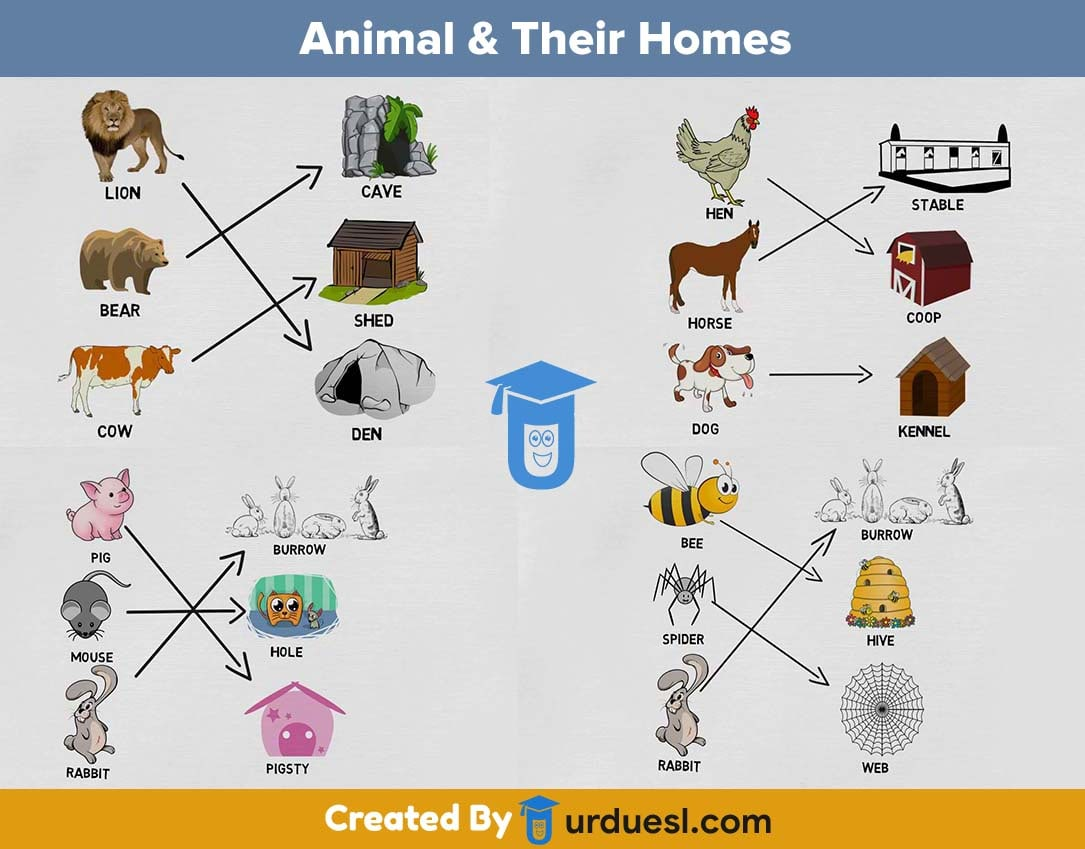 Animal And Their Homes With Pictures Download Amp Ppt