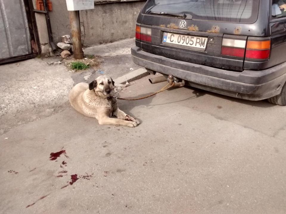 Изтезаваното куче. Снимка: Facebook