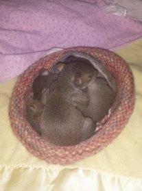 Снимка: Wildlife Rescue Nests