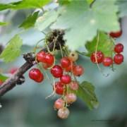 Beerenstarke Rezepte mit Vitamin B12