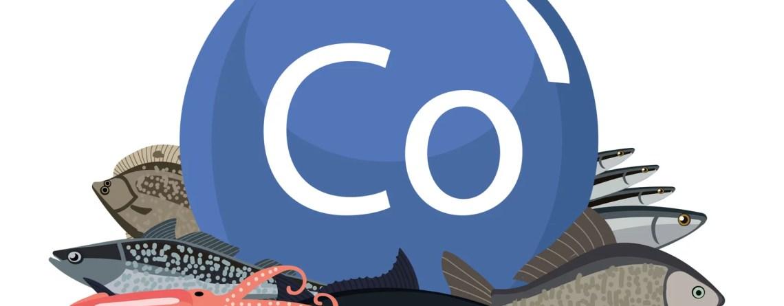 Lebensmittel mit viel Kobalt: Fisch und Meeresfrüchte