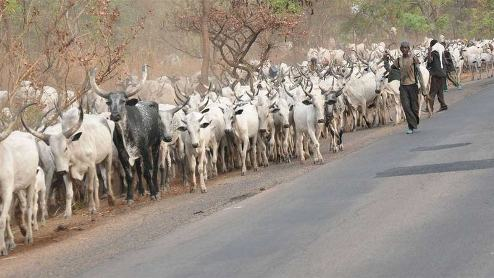 Herdsmen Protest Seven Days Eviction Order Hausa, Fulani  From Delta State Forest
