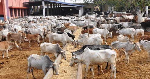 Grazing Bill: Delta Cattle Dealers Request For 30,000sqm Land Space In Each LGA