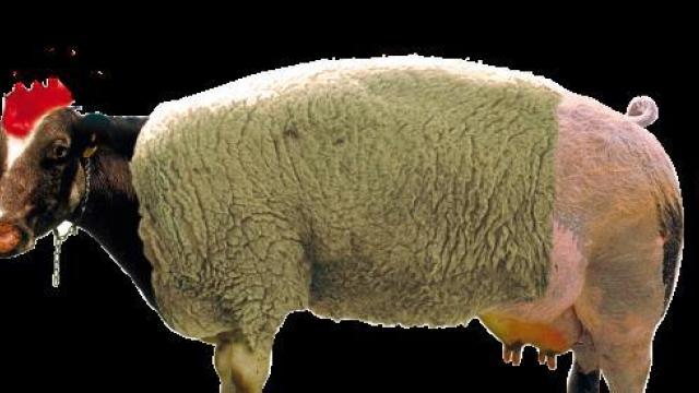Il ciclo dell' Eierlegende Wollmilchschwein