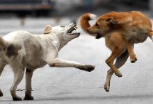 Photo of MP के 5 शहरों में बीते 05 सालों में आवारा कुत्तों की नसबंदी पर सरकार ने खर्च किए 17 करोड़