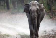 Photo of दर्दनाक हादसा : हाथी ने युवक को पटक-पटक कर मार डाला