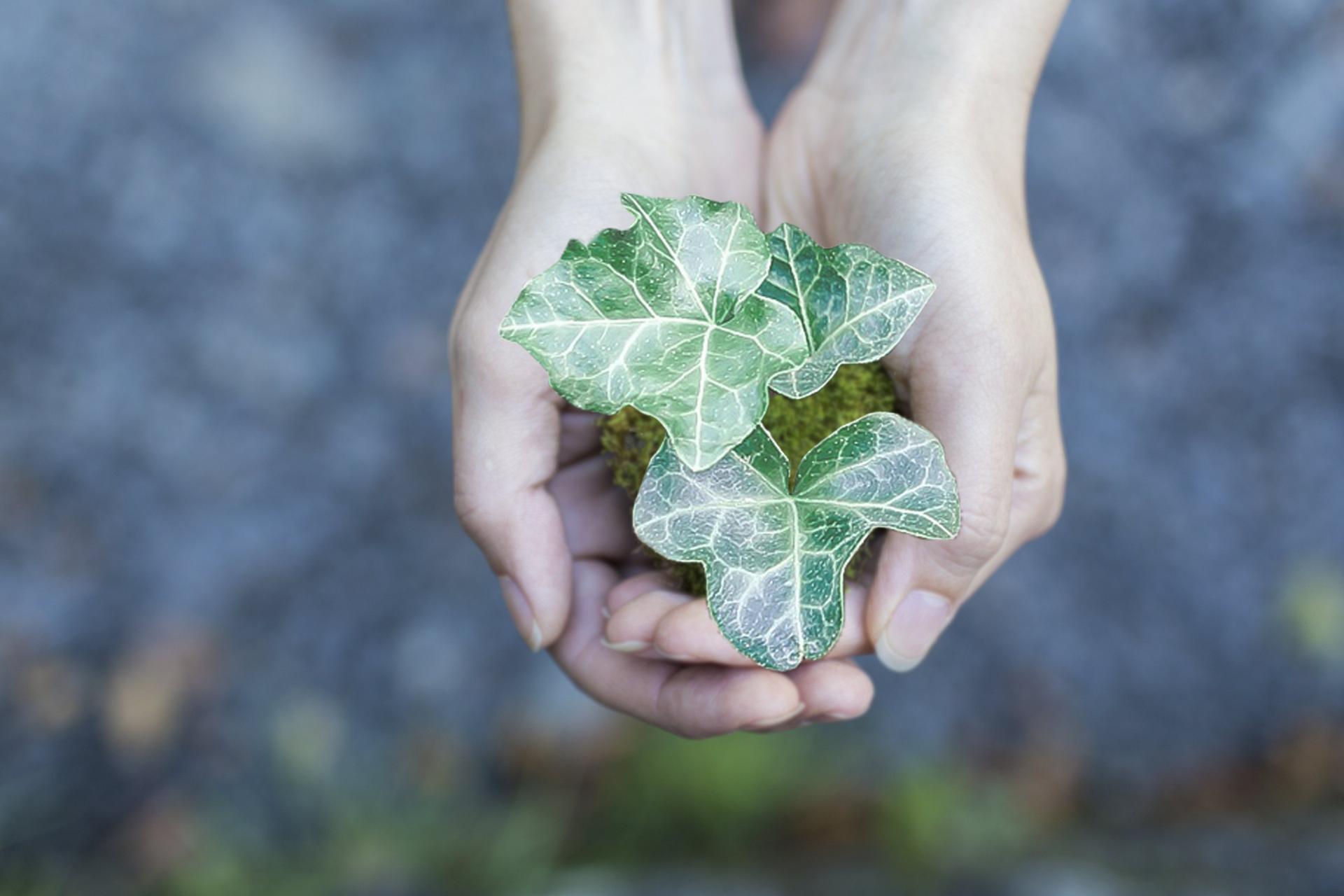 Aplicar criterios de sostenibilidad en la toma de decisiones