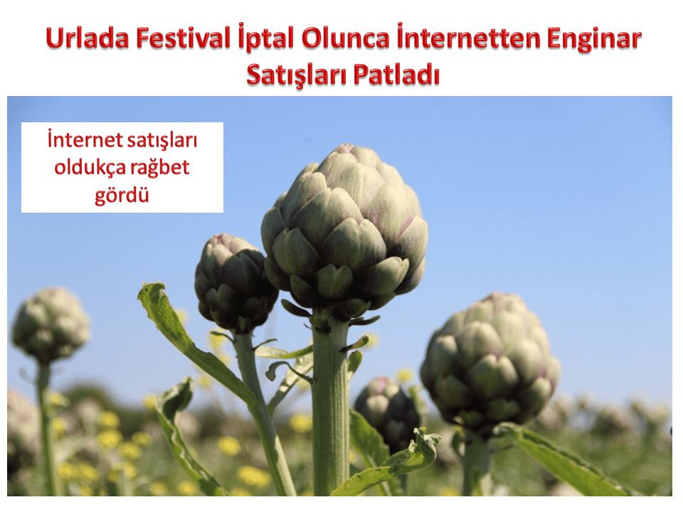 Urlada Festival İptal Olunca İnternetten Enginar Satışları Patladı