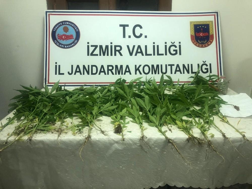 İzmirde Ormanlık Alanda Hint Keneviri Ele Geçirildi