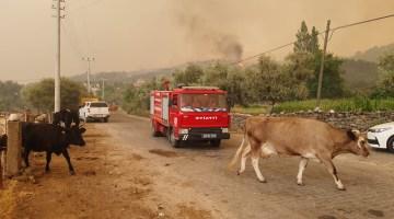 AKUT ve vatandaşlar yangın nedeniyle hayvancılık işletmelerini tahliye ediyor