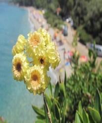Kuşadasının Özel Çiçekleri Açtı