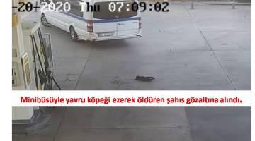 İzmirde Yavru Köpeği Ezerek Öldüren Sürücü Gözaltına Alındı