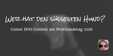 Wer hat den süssesten Hund? – Cutest DOG Contest am Welthundetag 2016