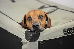 So lässt es sich aushalten: Auf der DOGLIVE in Münster findet jeder Hund ein gemütliches Plätzchen. Foto: Peter Grewer