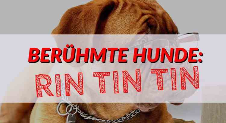 beruehmte hunde: rin tin tin