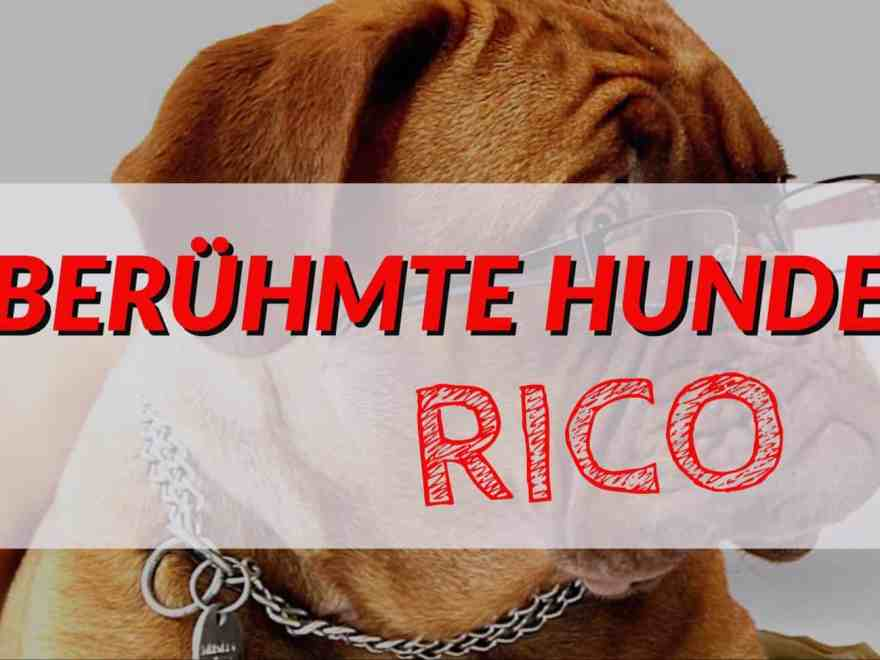 berühmte hunde: rico