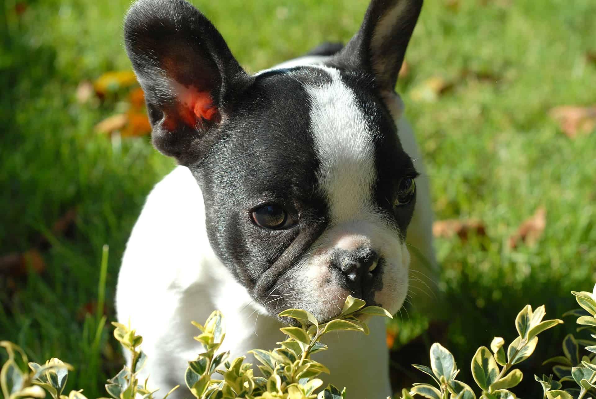 Puppy 265419 1920