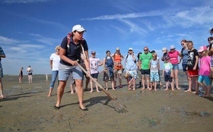 Das Weltnaturerbe Wattenmeer ist ein wahres Paradies für Naturfreunde. Kleintiere, Vögel, Fische und sogar Robben und Schweinswale lassen sich hier beobachten.