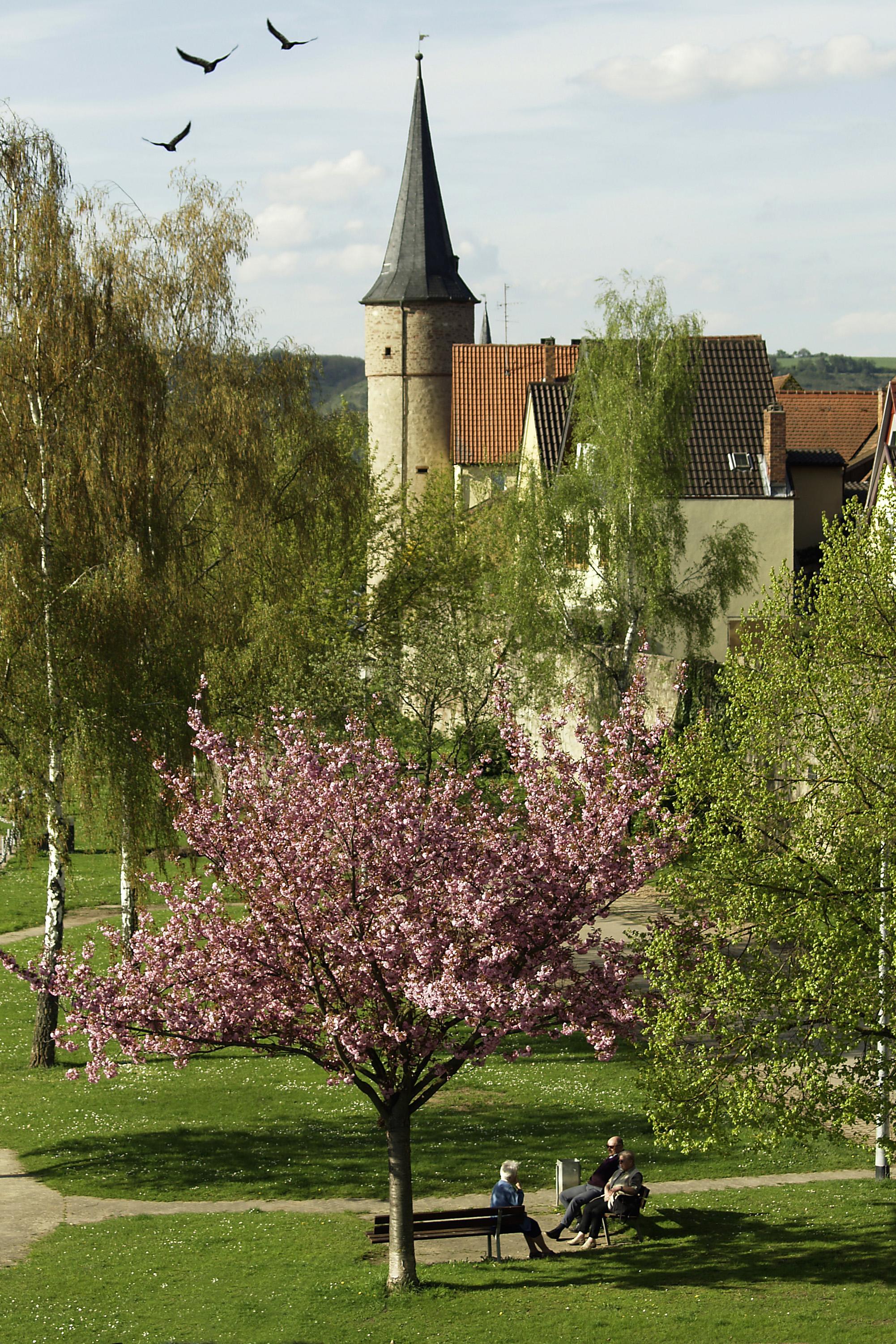 Es grünt und blüht: Frühlingsstimmung in Karlstadt.