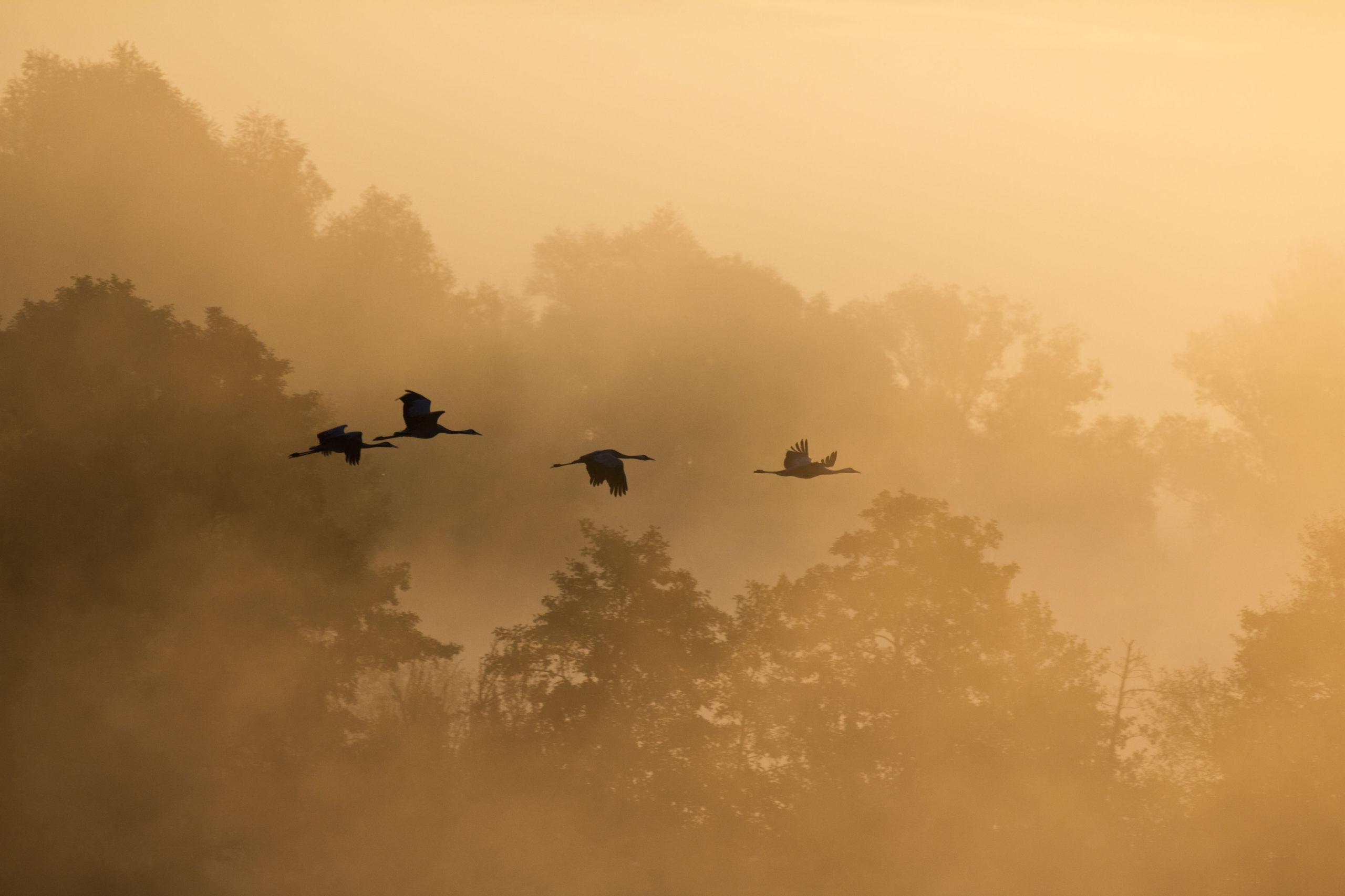 Die Gesänge der Zugvögel erleben