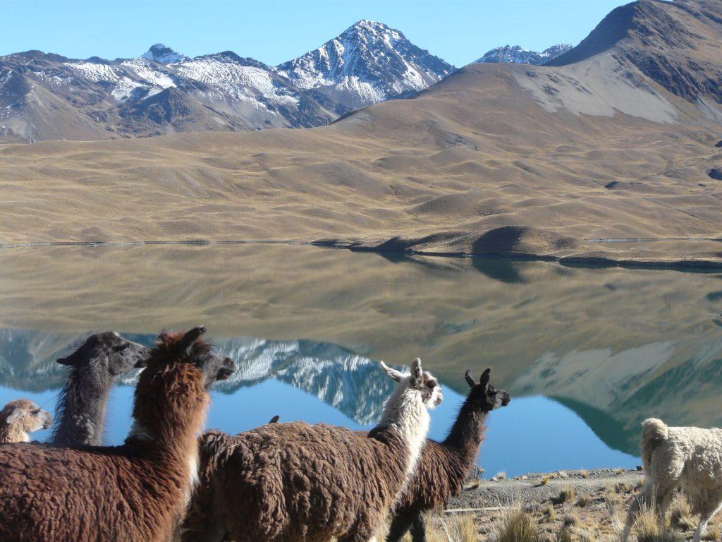 Peru und Bolivien gehören zu den faszinierendsten Ländern Südamerikas und bieten Reisenden spannende Natur- und Kulturerlebnisse.
