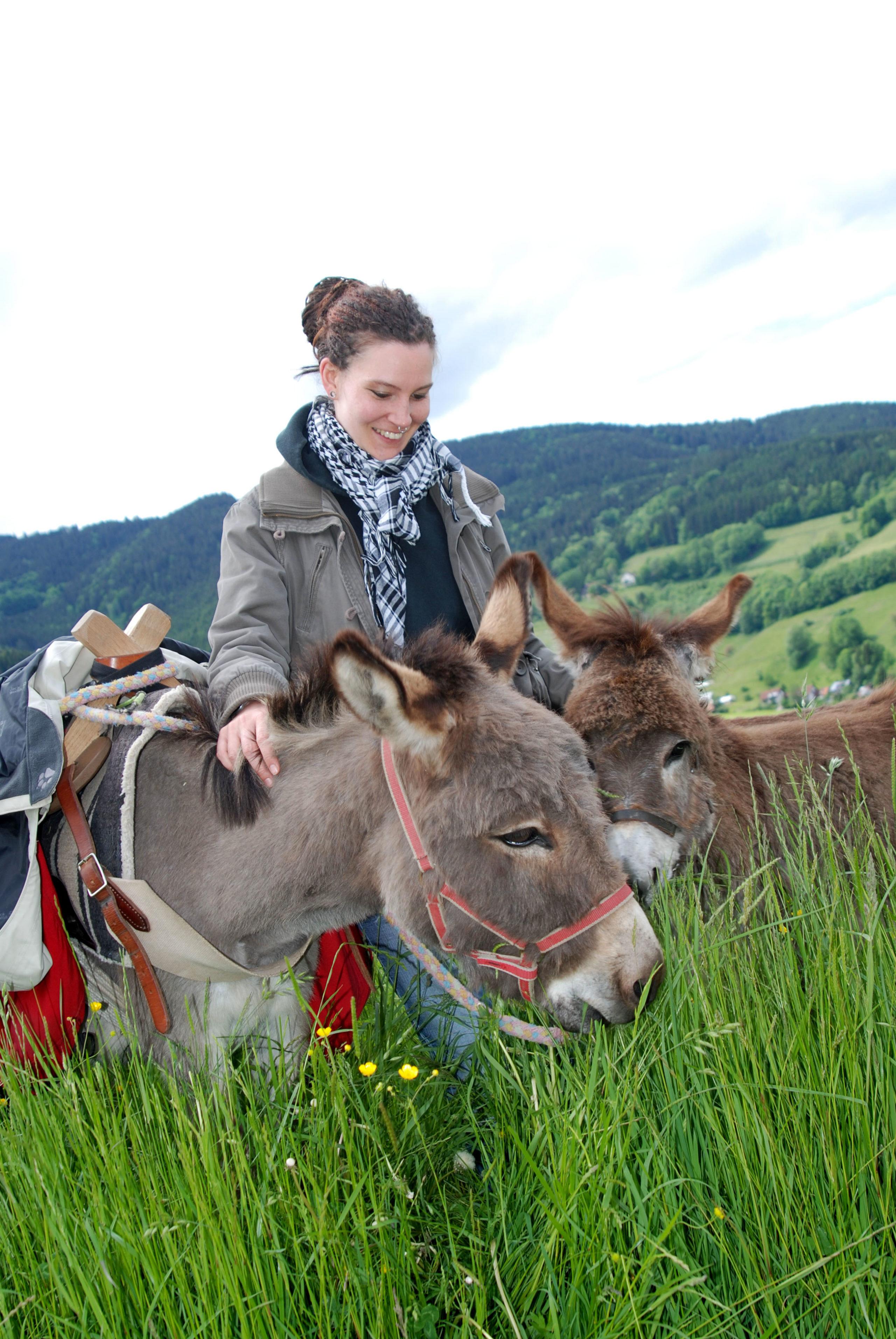 Auf einem Biohof im Schwarzwald werden die Esel von freiwilligen Helfern verwöhnt.
