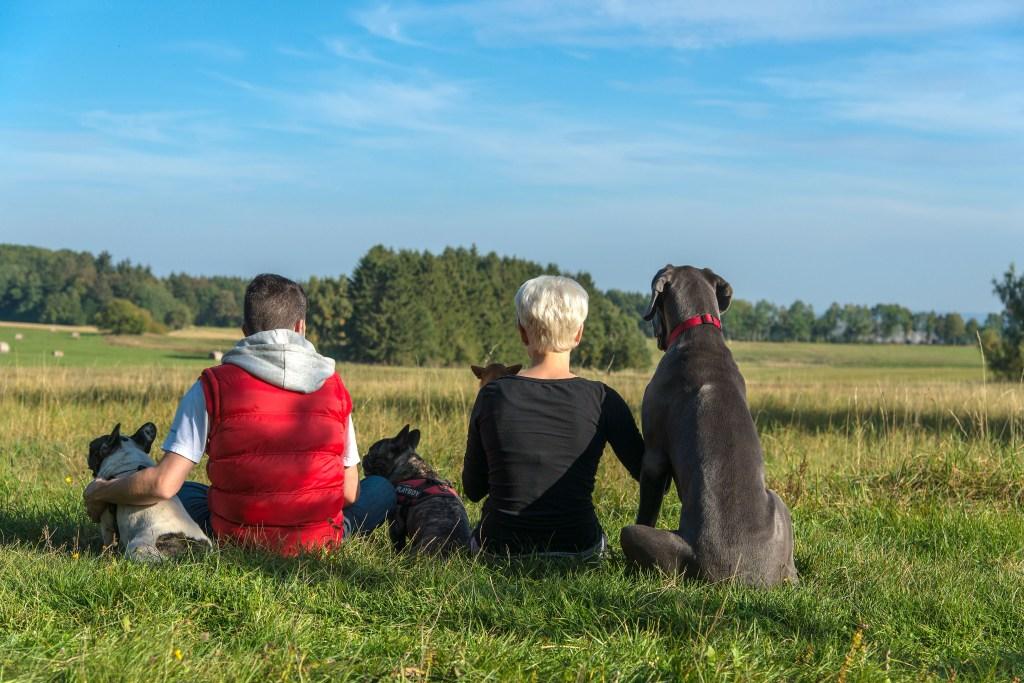 Rast bei einer Wanderung beim Urlaub mit Hund im Harz