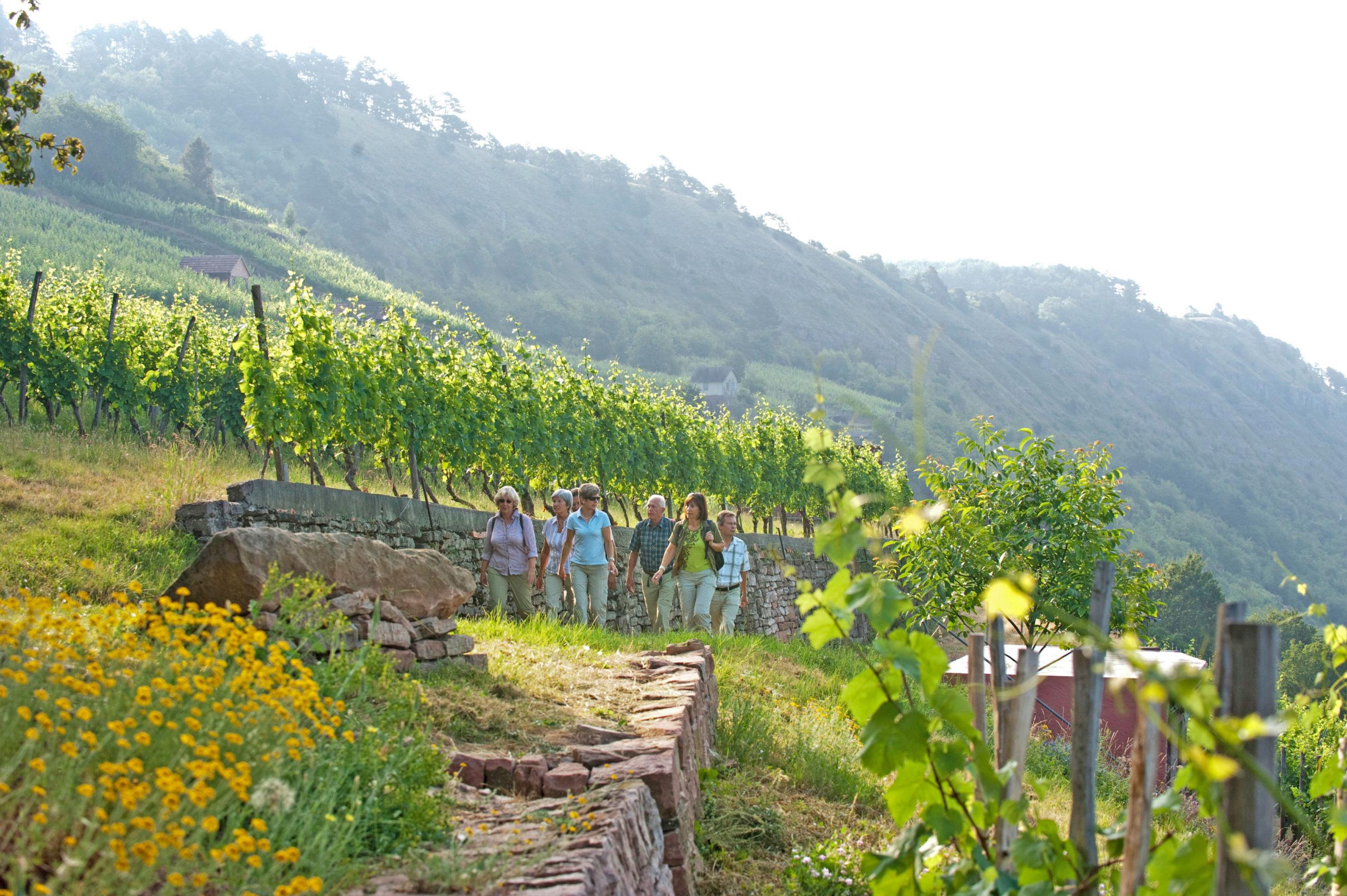 Das fränkische Weinland