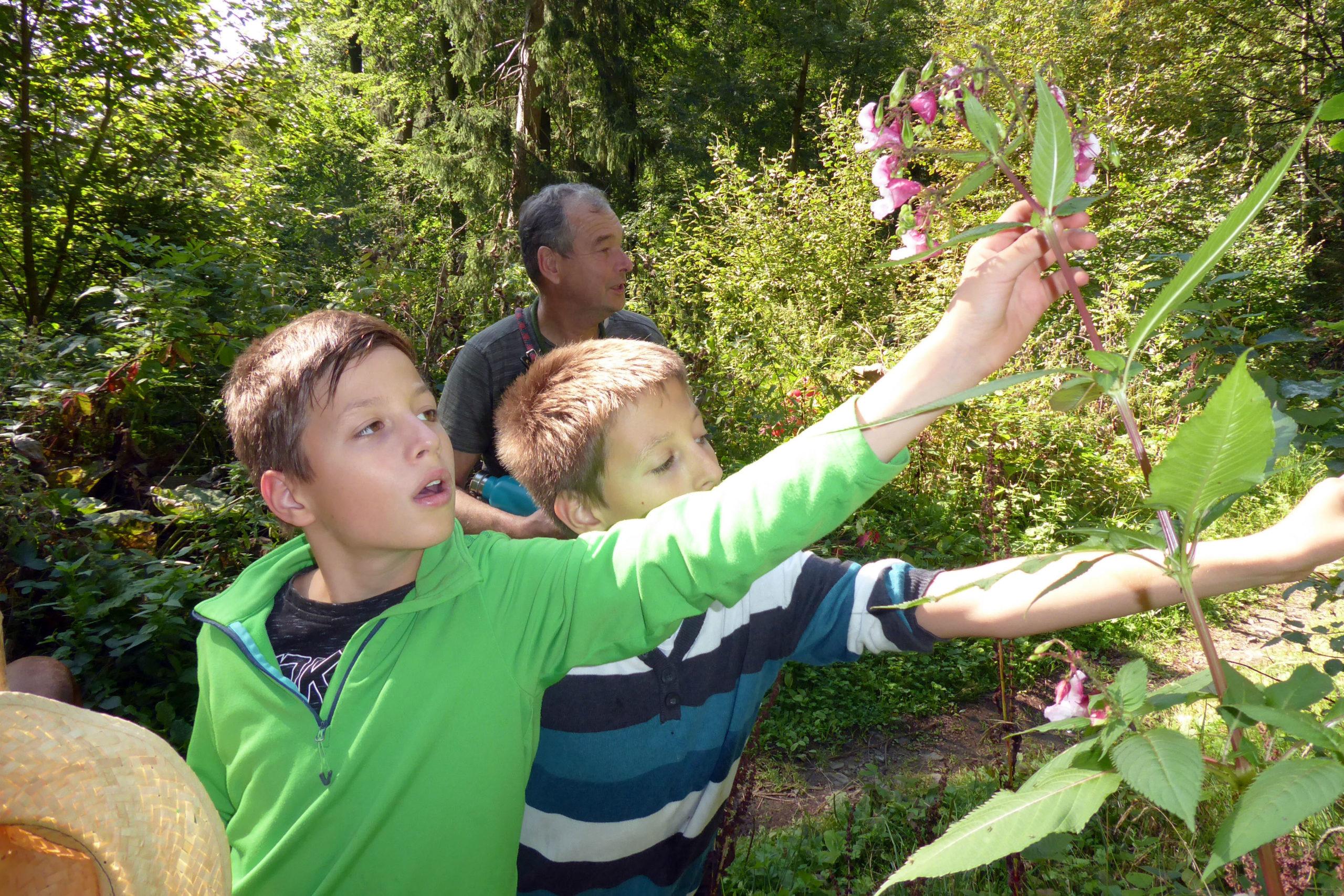 Wandern mit Kindern in der Harzer Bergwelt