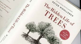 The Hidden Life of Trees book is a must-read for all nature-lovers!