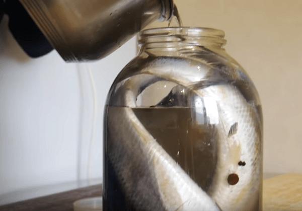 Салқындатылған тұздық майшабақты толтырыңыз