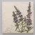 Invasive/Endangered (Floating Marsh Marigold and Purple Loosestrife) thumbnail