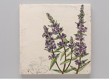 Invasive/Endangered (Floating Marsh Marigold and Purple Loosestrife)