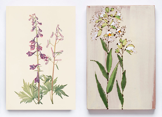 North American wild flowers. v. 1. Mary Vaux Walcott. 1925. Andersen Horticultural Library. UMN. (left)