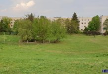 W ogrodzonej kępie krzaków przy Hirszfelda kryją się ruiny osiedlowego BASENU! Fot. Maciej Mazur