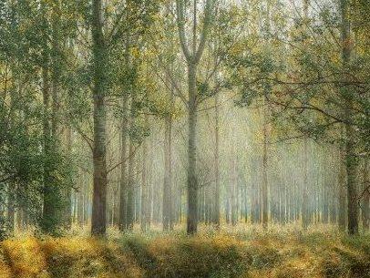 Krijimi i pemës, një mrekulli e vërtetë