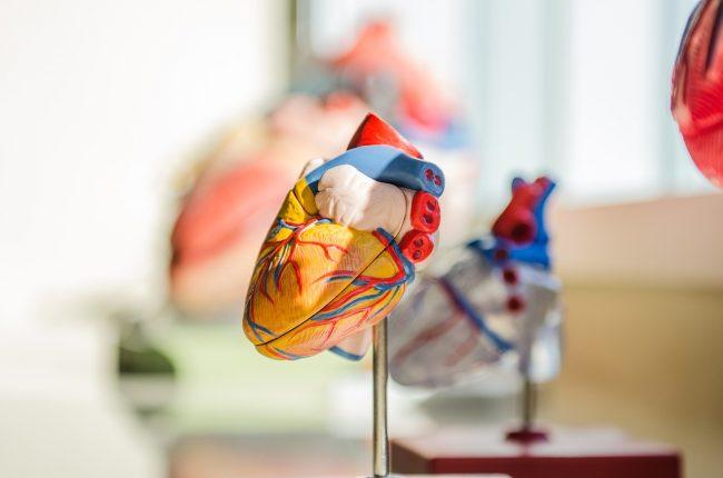 Zemra, ky organ i mrekullueshëm