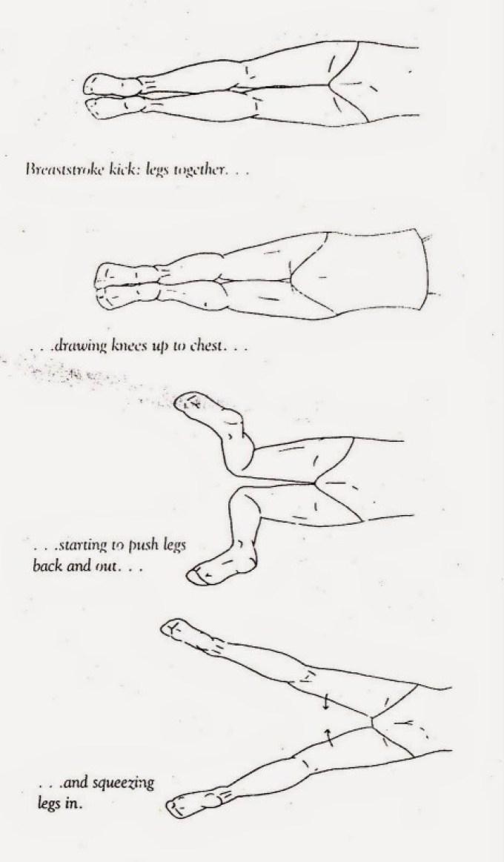 renang gaya dada - gerakan kaki