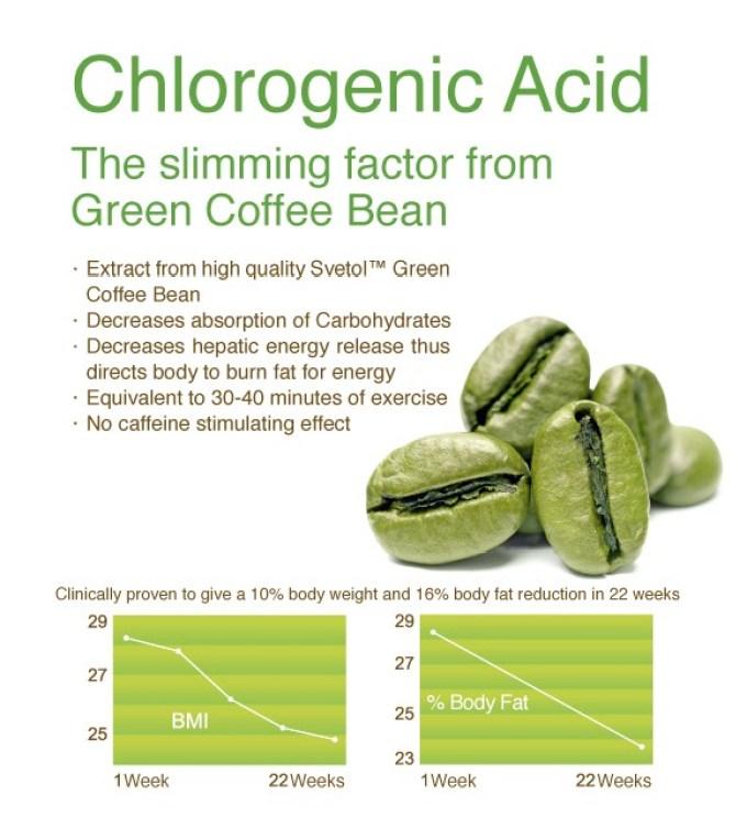 jual kopi hijau green coffee mengandung asam klorogenat