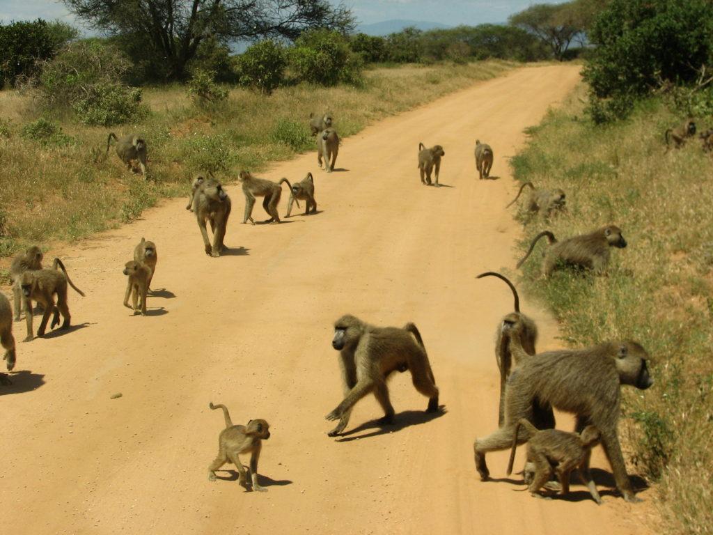 Природа Кении.