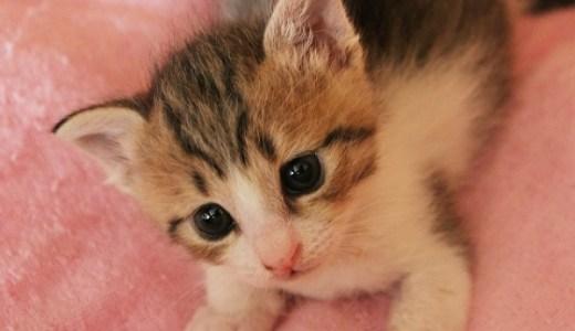 猫のパルボウイルス感染症の原因や症状,治療にかかる費用は?
