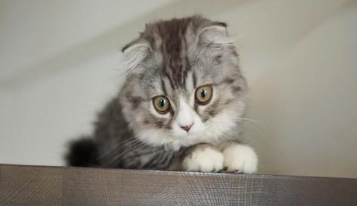 猫の角膜炎の原因や症状と治療や費用は?瞬きや涙が多い!