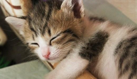 猫の耳の中が黒い・掻く!耳ダニの原因や症状と治療費は?