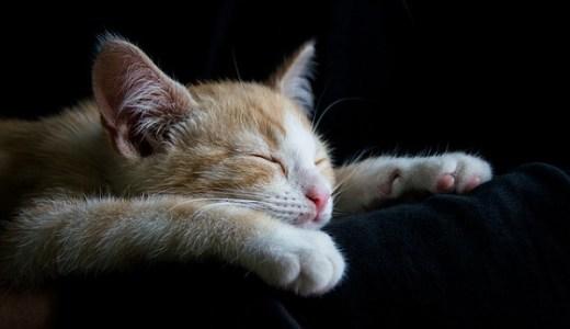 猫の熱中症の原因や症状は?応急処置や役立つ予防対策まとめ